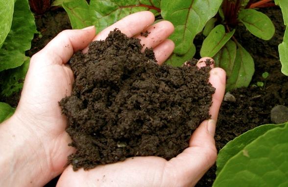 Bulk Compost Boise Victory Greens