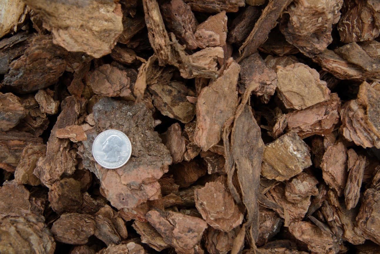 Medium Chunk Bark